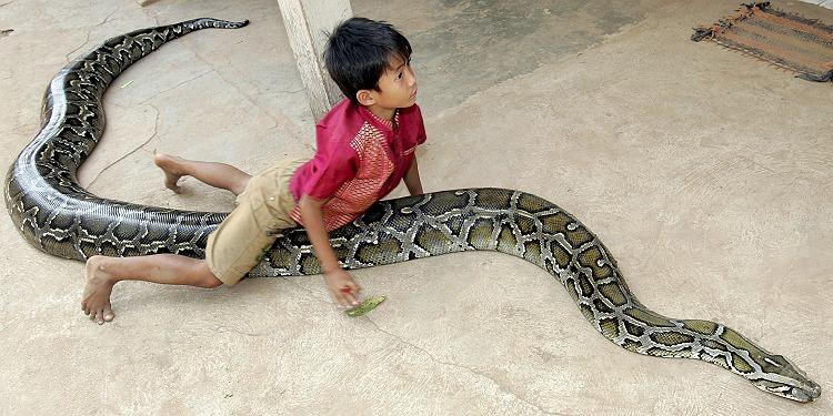 Python ist bester Freund eines kleinen Kambodschaners